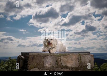 Ein Kleiner Weißer Hund Sitzt Vor Einer Beeindruckenden Wolkenformation. - Stockfoto