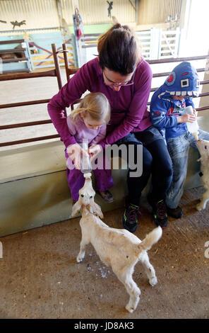 Ein kleines Mädchen und ihre Mutter das Füttern mit der Flasche eine Ziege an Putlake Adventure Farm nr in Swanage, - Stockfoto