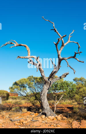 Toter Baum im australischen Outback im Kings Canyon, Northern Territory, Australien. - Stockfoto