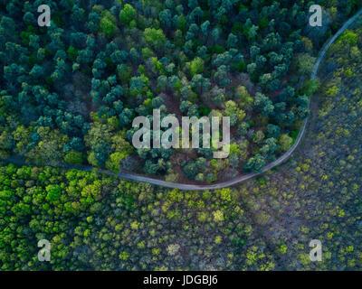 Straße geht kurvenreich durch schöne grüne blaue Waldlandschaft, Luftbild - Stockfoto