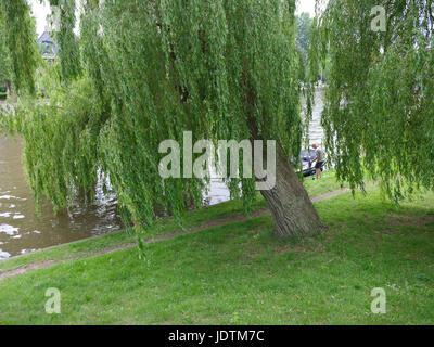 Leeuwarden, Niederlande, 11. Juni 2017: Mann und Frau parken Sie ihr Boot unter Weidenbaum im Zentrum der alten - Stockfoto