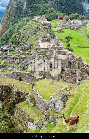 Vertikale Ansicht von einem Lama mit den Inka-Ruinen von Machu Picchu im Hintergrund - Stockfoto