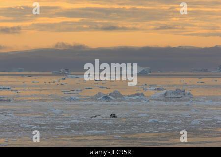 Grönland, Disko-Bucht, Ilulissat, Fjord, Eisberge, Treibeis, Nachleuchten, anzeigen, Westgrönland, Eis, Gletscher, - Stockfoto