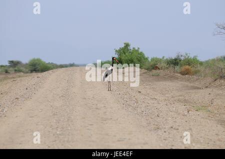 Col-Storch, Straße, südlichen Omotal, Südäthiopien, - Stockfoto