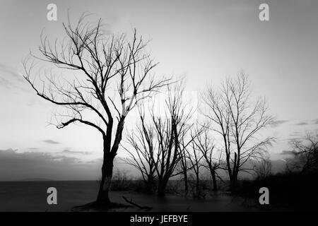 Lange Exposition Foto von Bäumen über einen See mit perfekt stilles Wasser und einige windgepeitschten Zweige - Stockfoto