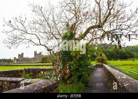 Baum mit verschiedenen Glaubens Angebote im 15. Jahrhundert Fore Benediktinerabtei Ruine im Norden des Lough Lene - Stockfoto