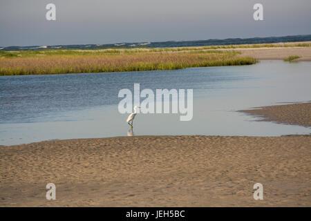 Snowy Egret auf das Feuchtgebiet - Stockfoto