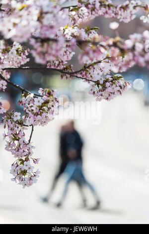 Blühende Bäume, Fußgänger auf Hintergrund - Stockfoto