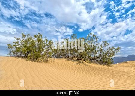 Mesquite flache Sanddünen im Death Valley in Kalifornien - Stockfoto