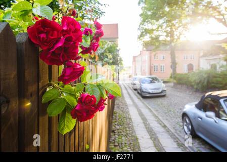 Rote Rosenblüten, Straße auf Hintergrund - Stockfoto