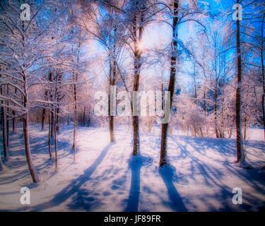 DE - Bayern: Winter-Wunderland in der Nähe von Bad Tölz - Stockfoto