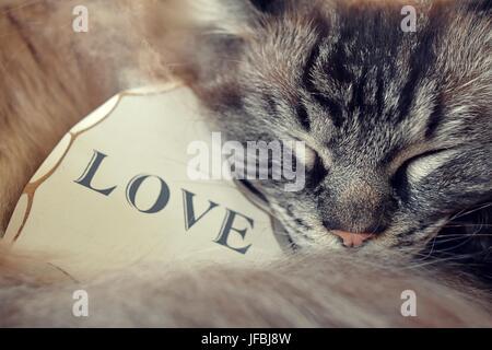 Ragdoll Katze schlafen mit einer weißen hölzernen Liebe Herzensliebe WithThe Text schrieb über sie. - Stockfoto