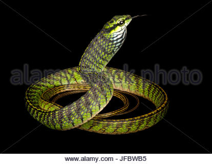 Eine große Augen grüne Baumschlange, Rhamnophis Aethiopissa. - Stockfoto