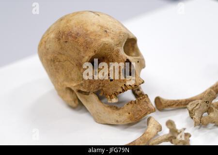 Alten menschlichen Knochen und Schädel Hintergrund Stockfoto, Bild ...