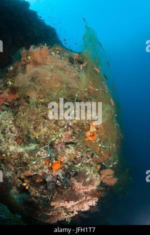 Verlorene Fischernetz deckt Korallenriff, Indopazifik, Indonesien - Stockfoto