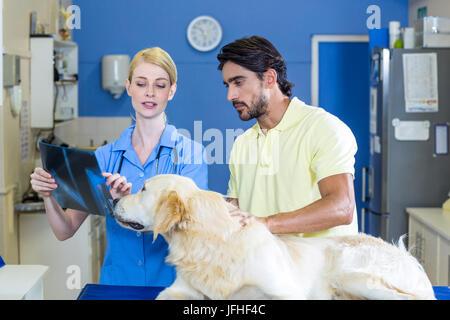 Frau Tierarzt zeigen die Hunde x-ray an den Besitzer - Stockfoto