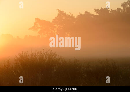 Sommer Sonnenaufgang mit Nebel im Moor mit Weiden und Kiefern. Klein Bylaer, Barneveld, Niederlande, Europa