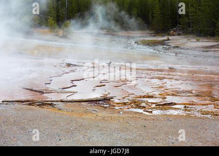 Nahaufnahme des Randes der Echinus Geyser, Rücken-Becken, Norris Geyser Basin, Yellowstone-Nationalpark - Stockfoto