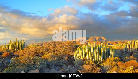 Schöner Panoramablick auf Wüste bei Sonnenuntergang in Teneriffa, Kanarische Inseln - Stockfoto