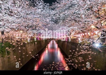 Kirschblüte ausgekleidet Meguro Kanal in der Nacht in Tokio, Japan. Frühling im April in Tokio, Japan. - Stockfoto