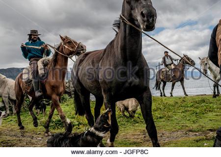 Bagualeros, oder Cowboys, die wilden Tiere zu erfassen, Herde Pferde für das branding auf einer Ranch. - Stockfoto