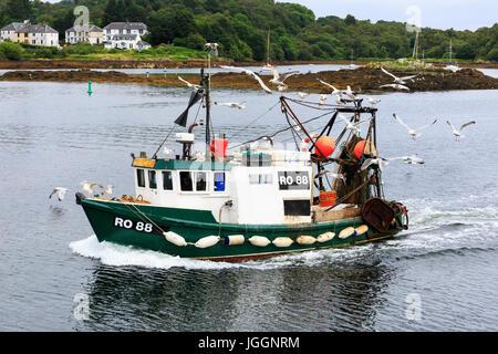 Angelboot/Fischerboot kommend in den Hafen von Tarbert, Loch Fyne umgeben von Möwen, Schottland, UK - Stockfoto