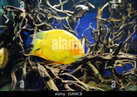 Unterwasser-Szene, zeigt verschiedene bunte Fische schwimmen - Stockfoto