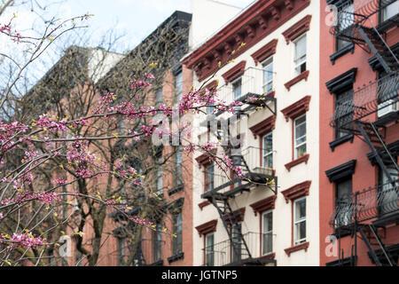 New York City Straßenszene mit bunt blühenden Baum Frühling und Hintergrund der alten Wohnhäuser - Stockfoto