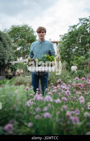 Mann im Garten halten Tablett mit Pflanzen - Stockfoto