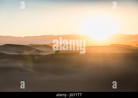 Sonnendurchflutetes Mesquite flache Sanddünen im Death Valley Nationalpark, Kalifornien, USA - Stockfoto