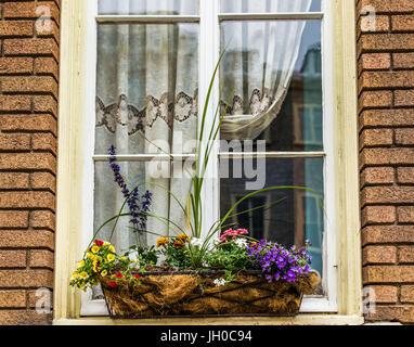 Blumen Korb Closeup Auf Fensterbank Aussen Stein Ziegel Europaischen
