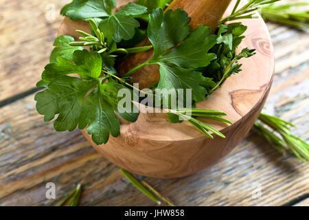 Verschiedene Kräuter auf einem alten Holztisch. Holz- Mörtel mit Rosmarin, Koriander, Thymian und Petersilie. - Stockfoto