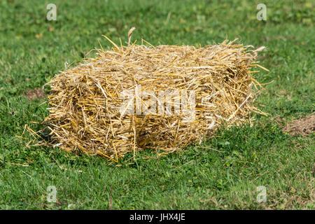 Kleine Strohballen auf der grünen Wiese. - Stockfoto