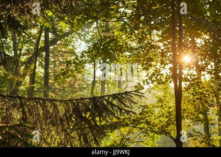 Sonnenuntergang über immergrüne Bäume, Mt. Gretna, Lebanon County, Pennsylvania, USA - Stockfoto