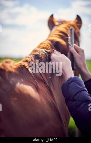 Eine junge Frau, die ihr Pferd auf eine Koppel Fellpflege. - Stockfoto