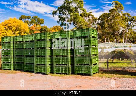 Grüne Traube Kisten gestapelt in einem Weingut in South Australia - Stockfoto