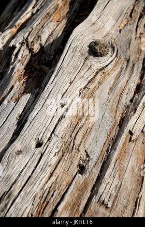 Verwitterte Log, Yellowstone-Nationalpark, Wyoming, USA - Stockfoto
