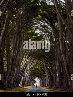 Ein Mann auf einem Segue mitten in der Tree-Tunnel im Bereich Point Reyes - Stockfoto