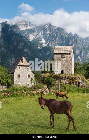 Weide bei Theth mit der Kulla, Lock-in-Turm und die albanischen Alpen im Hintergrund, Nordalbanien. - Stockfoto