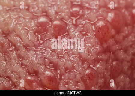 Geschmacksknospen auf der Zunge Stockfoto, Bild: 135015145 - Alamy