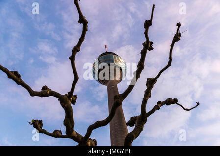 Fernmeldeturm gesehen zwischen den Ästen eines Baumes gegen den blauen Himmel in Düsseldorf, Deutschland - Stockfoto