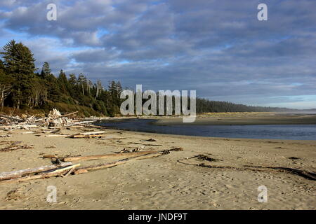 Wüst Long Beach in der Nähe von Tofino im Pacific Rim National Park Reserve auf Vancouver Island, British Columbia. - Stockfoto