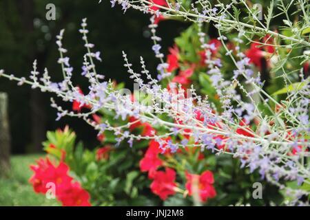 Verarbeitet mit VSCO mit a9 preset - Stockfoto