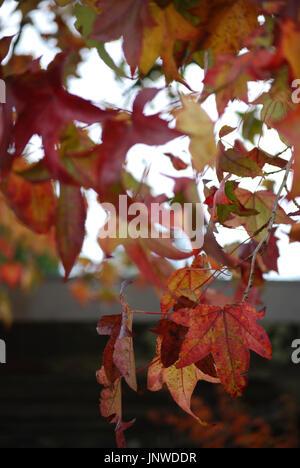 Bunte Blätter im Herbst in der abstrakten Bewegung - Stockfoto