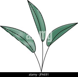 weißer Hintergrund der farbige Kreide Silhouette der Blätter lanzettlich - Stockfoto
