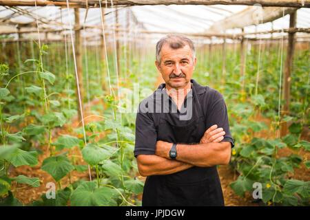 Mittleren Alter Mann präsentiert Gurken Gemüse in einem Gewächshaus. - Stockfoto