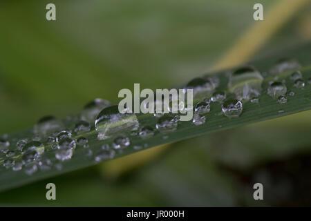 Wassertropfen auf dem Rasen - Stockfoto