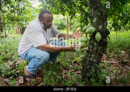 Mann zeigt Kakaofrüchte in einer Plantage, Bela Vista Village, Sao Tome und Principe-Insel - Stockfoto