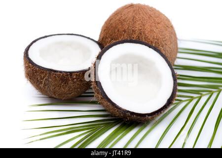 Ganze Reife Kokosnuss auf Palm Leaf Grau Grungy Stein Hintergrund ...