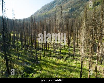 Der ausgebrannte Wald bleibt als Erinnerung der 2015 Wolverine Brand im Okanogan-Wenatchee National Forest im Staat - Stockfoto